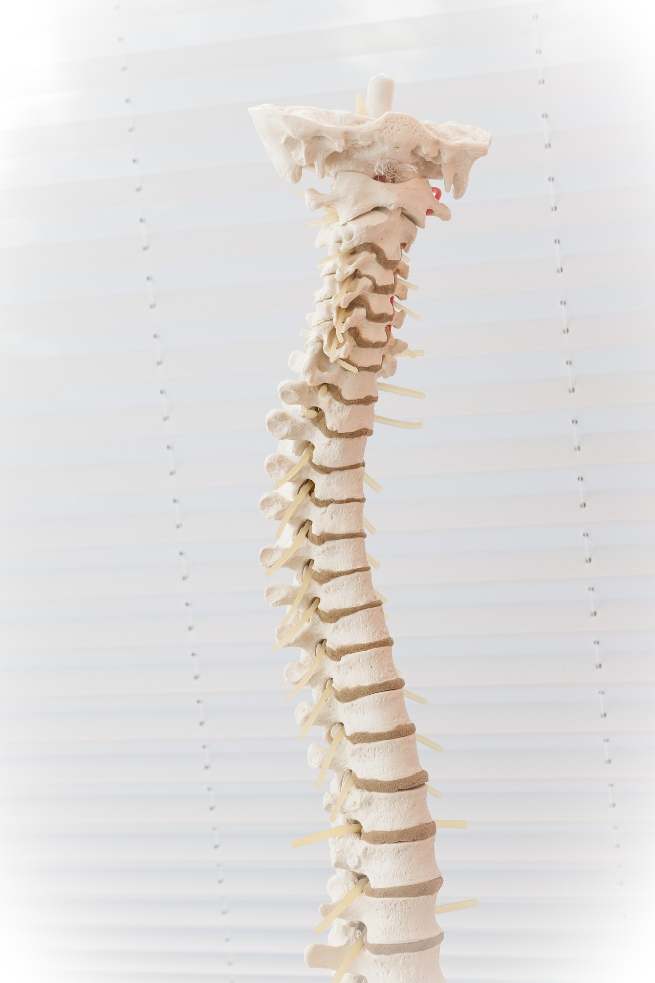Spinal Column Alignment Treatment